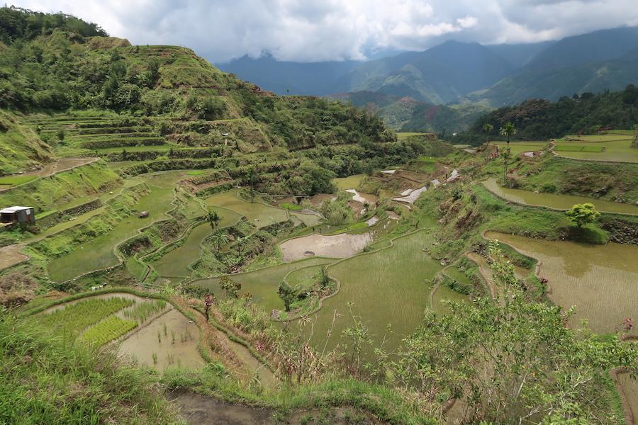 フィリピンの棚田の風景イフガオ