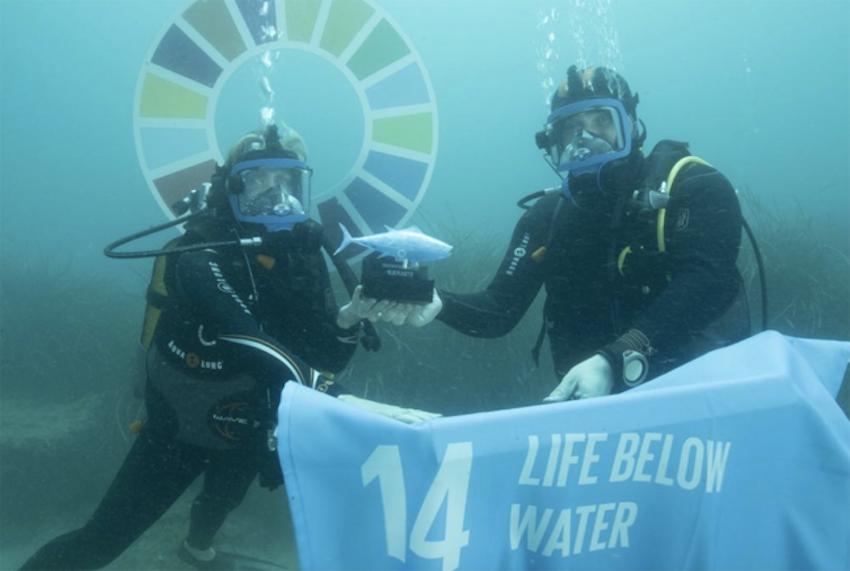 Life Below Water Impact Award