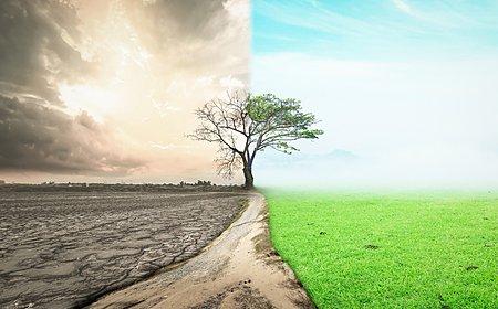【自然環境について考える教科書】藤子・F・不二雄先生の『みどりの守り神』の画像