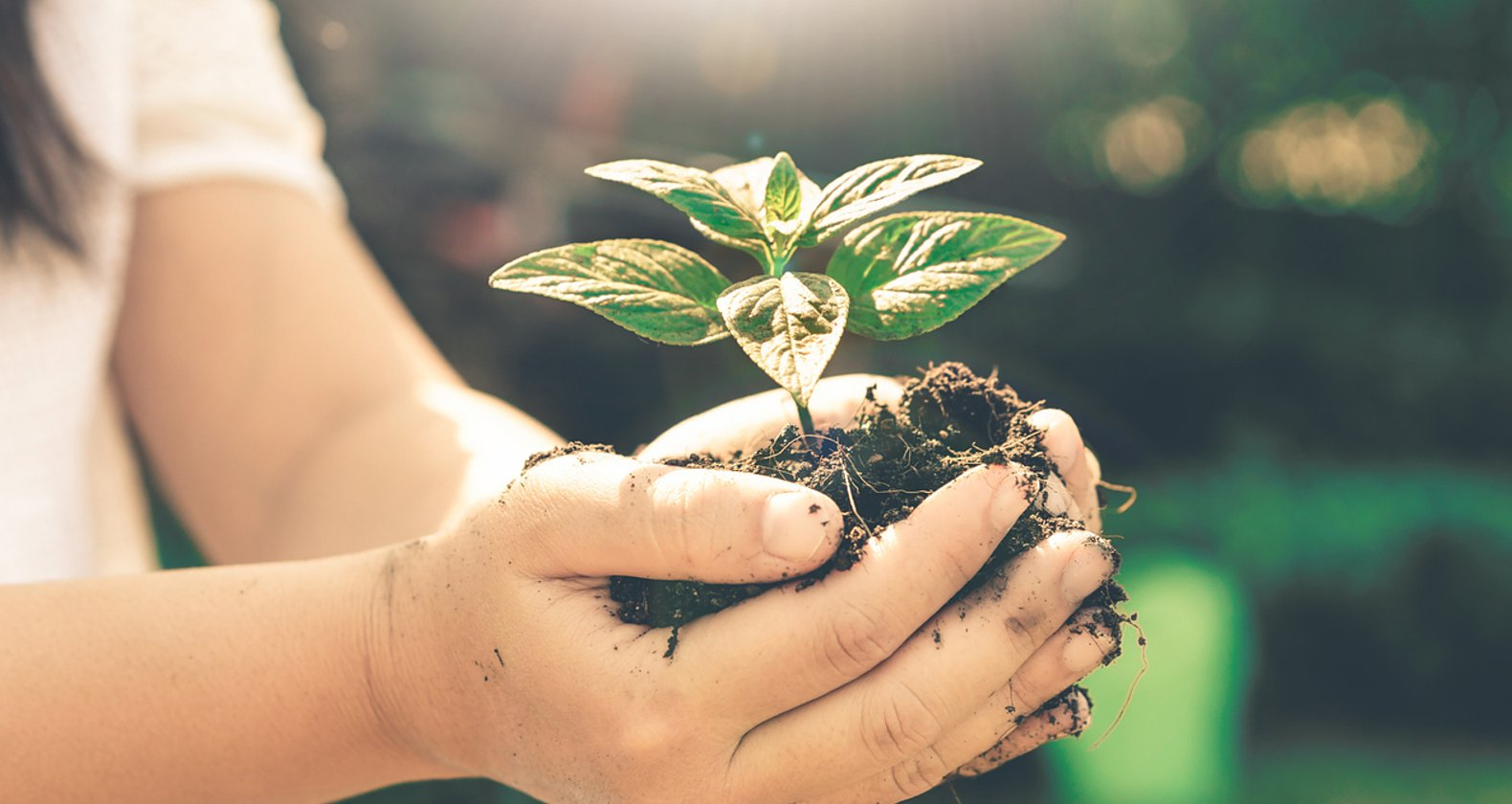 グリーン購入|SDGs目標12との関係と取り組み事例を紹介の画像